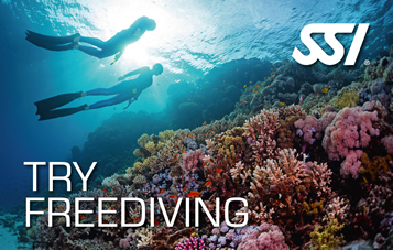 Intro to Freediving at El Mar Diving Center