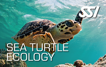 Sea Turtle Ecology Specialty